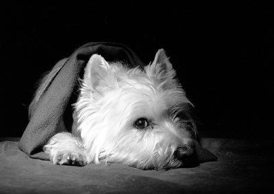 Hund-SW